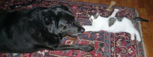 dogcats