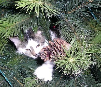 treecat1