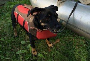 nauticaldog